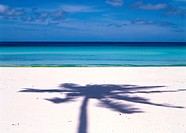 Shadow of palm tree on beach