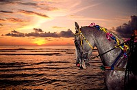Horse by sea at sunset