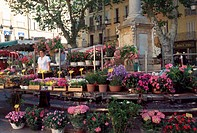 Flower Market, Place de l´Hôtel, Aix-en-Provence