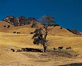Countryside Near Yuba City, California, USA