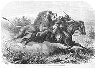 Lion attacking horseman, drawing by Janet-Lange. Engraving from 'Le tour du monde'