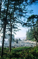 Ruby Beach from the headland above. Olympic National Park. Washington. USA