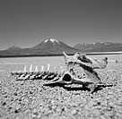 Black and white image of bones in a barren landscape (thumbnail)