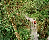 Rainforest aerial walkway.  Tourists walking along a  path  suspended  among the trunks of rainforest trees.  Rainforests are hot, wet evergreen fores...