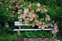 Pink/white Hydrangea