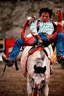 SG F, Freizeit, Hobby, Sport, Rodeo, Mann auf Wildpferd,  Foto: Moody reiten tierquälerei