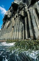 Columnar jointing in basalt cliffs. Smoothwater Bay. Campbell Island. New Zealand