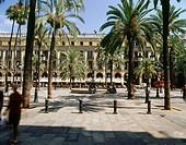 Geo., Spanien, Barcelona, Plätze, Placa Reial, Palmen, Katalonien,  platz
