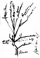 Darwin, Charles Robert, 12.2.1809 - 19.4.1882, brit. Naturforscher, handschriftlicher Entwurf eines Stammbaums der Primaten, 1868  menschen menschenaf...