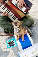 Gypsy boy playing in streets with dog. Lisbon. Portugal