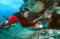 Diver spreading cyanide on coral reef while collecting fish for aquarium trade
