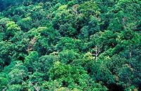 Forest at Gunung Datuk Rembau, Malaysia