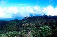 Forest at Gunung Batu Putih, Malaysia