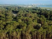 La Dehesa de El Saler. Parque Natural de la Albufera. Valencia. Spain