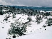 Beeches. Sierra de Urbasa. Navarra. Spain