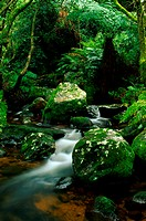 Stream, Forest, Venda, Limpopo Province, South Africa