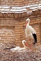 White Stork (Ciconia ciconia). Alfaro. La Rioja, Spain
