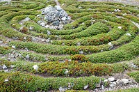 Labyrinth. Prehistoric maze of stones and plants. Photographed on the island of Solovki, Russia, where there are many stone labyrinths of unknown orig...