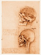 Skull anatomy. Historical artwork of human skulls by the Italian artist, engineer and scientist Leonardo da Vinci (1452-1519). The top sketch shows a ...