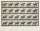 Time-lapse photographs a man on a trotting horse, 1872-1885.Photograph by Edweard James Muybridge (1830-1904), British-American photographer and pione...
