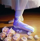 Ballet Shoes and Roses