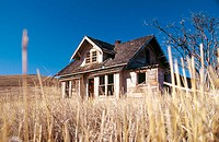 Field grass stubble with an abandoned house in background. Wallowa County, Oregon, USA