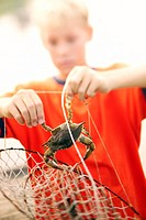 A boy removes a crab from a trap