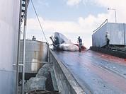 Men curing a whale in Hvaldjordur, Iceland.