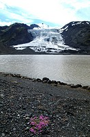 Muddy ice from the glacier Gigjokull