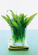Fresh ramsons (wild garlic) leaves in glass of water (2)