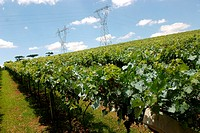 Plantations, vineyard, agriculture, Brazil