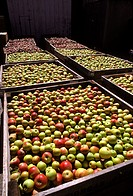 Large wooden crates filled with red and green apples.