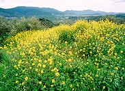 Spring wildflowers. Cazorla mountains, Jaén province. Spain