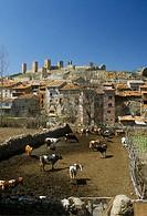 Cattle Corral. Molina de Aragón (Guadalajara). Spain