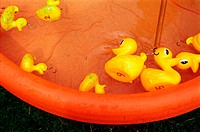 Rubber ducks in paddling pool