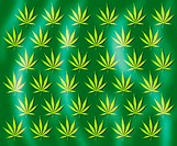 Cannabis leaves. Computer artwork of cannabis leaves arranged in rows. The cannabis (Cannabis sativa) or hemp plant is native to central Asia. Its lea...