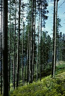 wood near himmelreich, schwarzwald, germany