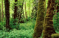 Lush forest in Tryon Creek State Park. Oregon. USA