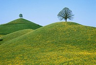 10204568, trees, spring, hill scenery, bald, baree, dandelion, meadows, hills, Switzerland,