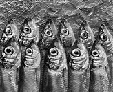Fish stacked in two rows