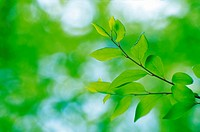 leaves,leaf,green,tree,nature,scenery