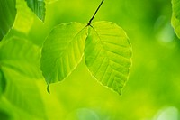 nature,scenery,green leaf,plant