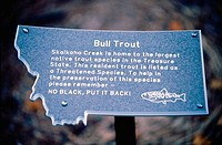 Bull Trout endangered species sign. Montana, USA
