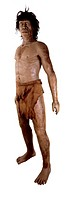 Homo ergaster. Model of a Homo ergaster man, who dates back 1.9 million years and is traditionally considered an early type of H. erectus by scientist...