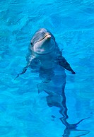 Dolphin (thumbnail)