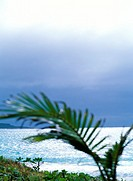 Palm tree & beach (thumbnail)