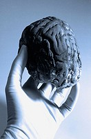 Rubber gloved hand holding a fake human brain