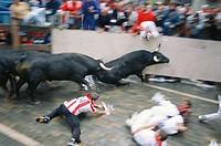 ´Encierro´ running of the bulls, San Fermin festival. Pamplona. Navarre, Spain