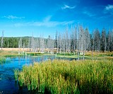 Firehole Valley after 1988 fire, Yellowstone National Park, Wyoming, USA