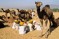 Camel fair in Pushkar. Rajasthan, India